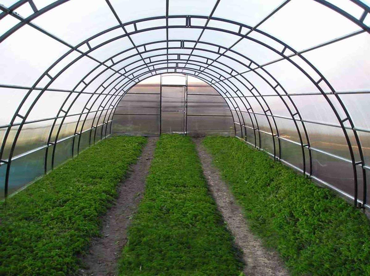 Tấm lợp lấy sáng đặc ruột Solarflat làm nhà kính nông nghiệp