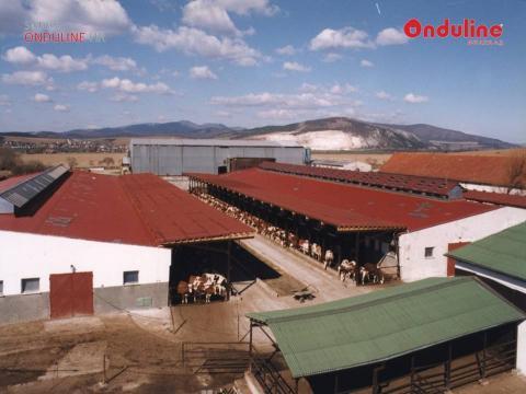 hình ảnh công trình sử dụng tấm lợp sinh thái onduvilla sơn mờ pic 5